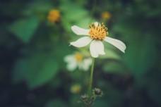 花朵特写商用背景