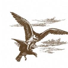 卡通手绘鸟简笔画