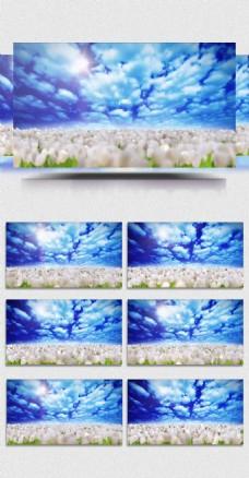 春天复苏蓝天白云花海背景视频