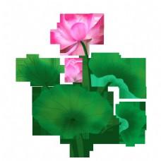 粉色荷花和绿色荷叶
