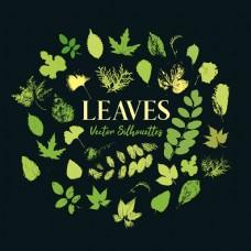 植物或植物的绿叶印刷品