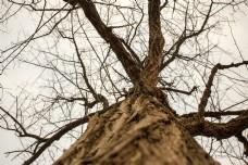 春天之大树的无奈