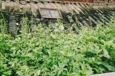 窗前绿草摄影图片