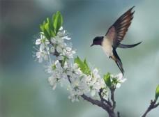春天花卉小鸟