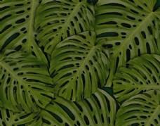 热带树木树叶