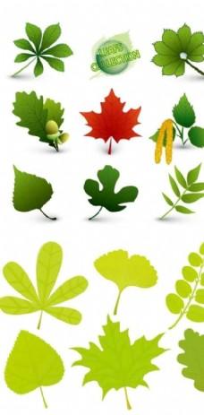 不同植物葉子矢量圖