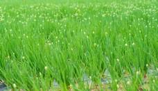 绿色田野春天风光