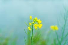 黄色小花大光圈特写