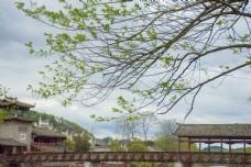 春天的山川树木河流木桥