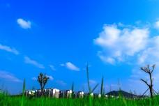日光下的美丽校园蓝天白云草地免费下载