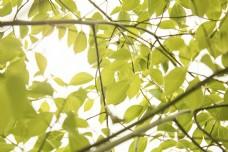 树木树叶商用摄影