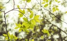 树枝树木树叶商用摄影